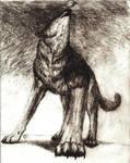 dark wolf howling to black sky