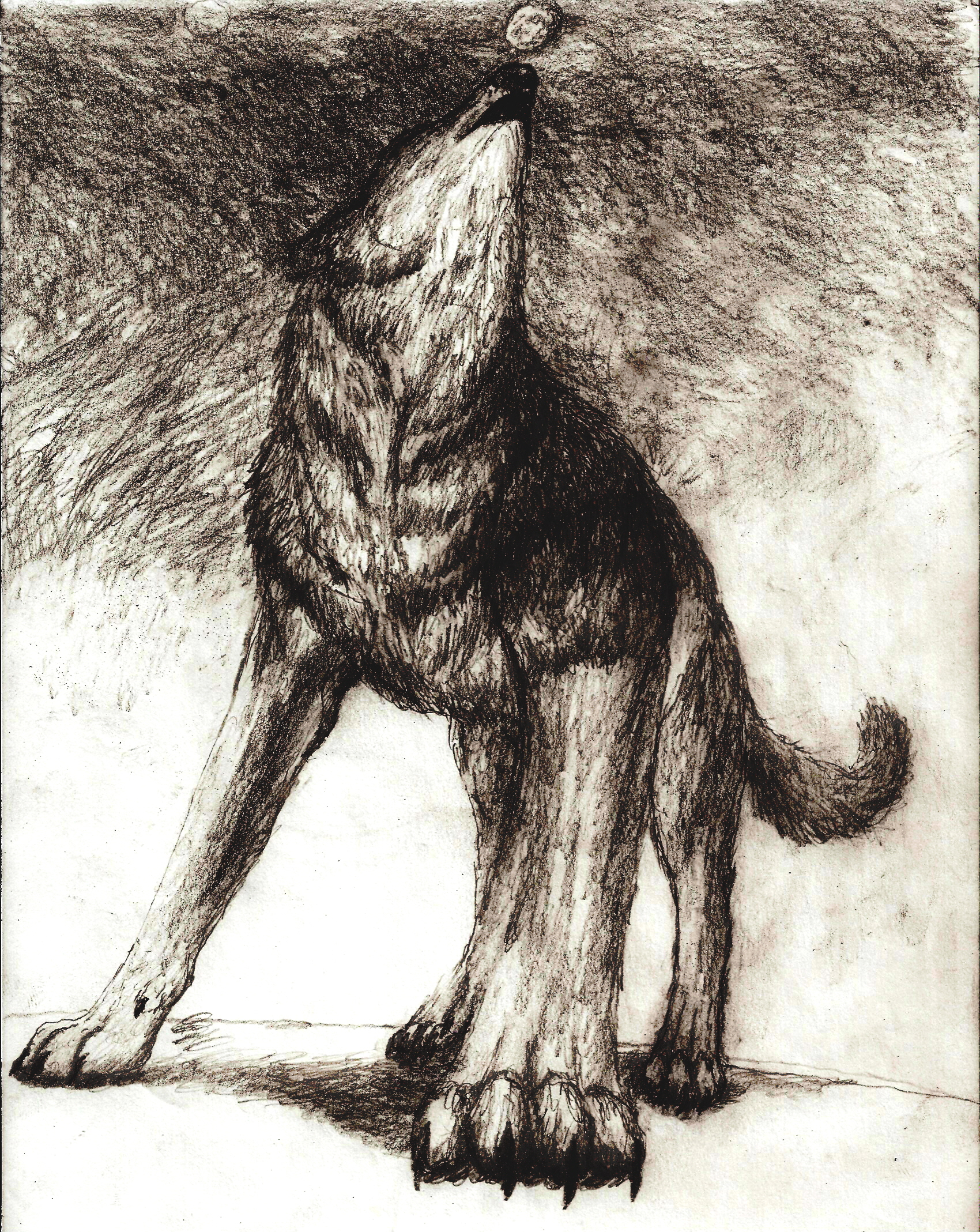 http://fc07.deviantart.net/fs36/f/2008/280/b/7/dark_wolf_howling_to_black_sky_by_Rhahsid.jpg