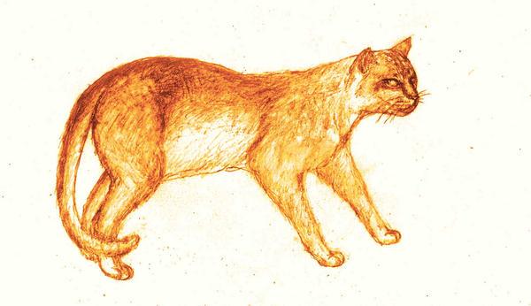 El gato,  el dorado by Rhahsid