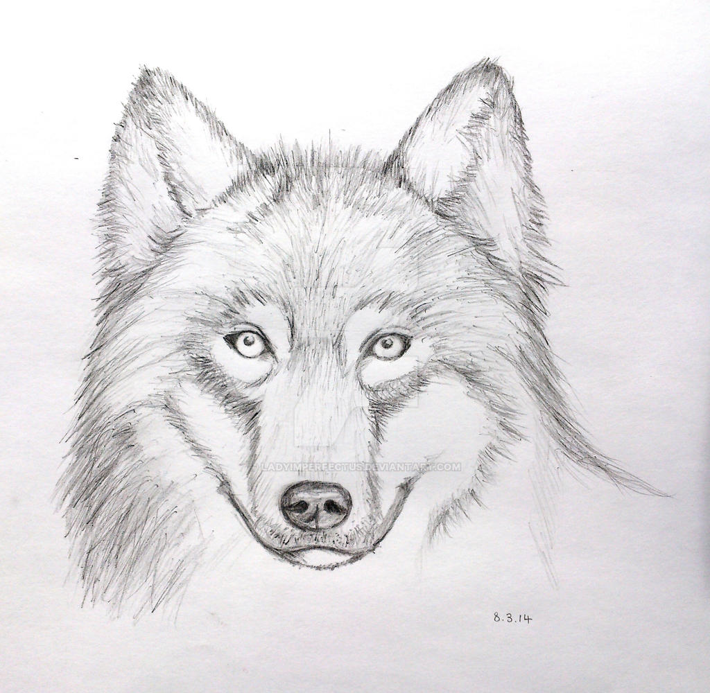 Wolf Drawings In Pencil  Drawing Pencil