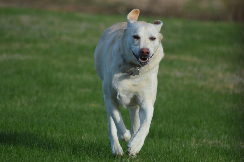 Run Like The Wind by calr121810
