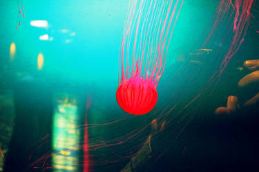 Jelly Fish 02 by HQN89