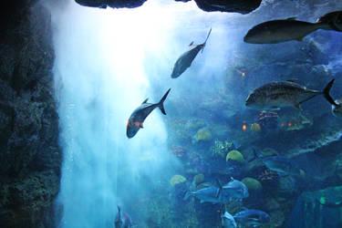 Walking Underwater by HQN89