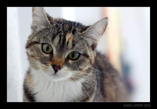 Neighbor's Cat