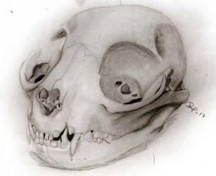 Catskull by RockValley
