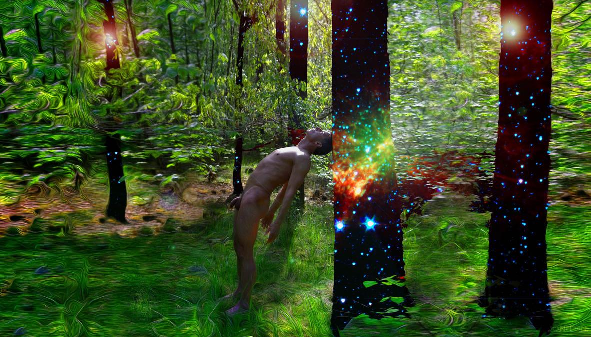 Stephan Tobias Enchanted Forrest 4 by Jonitron