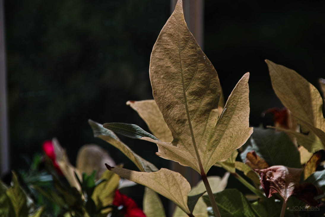 Autumn Red Sdim3683 by Jonitron