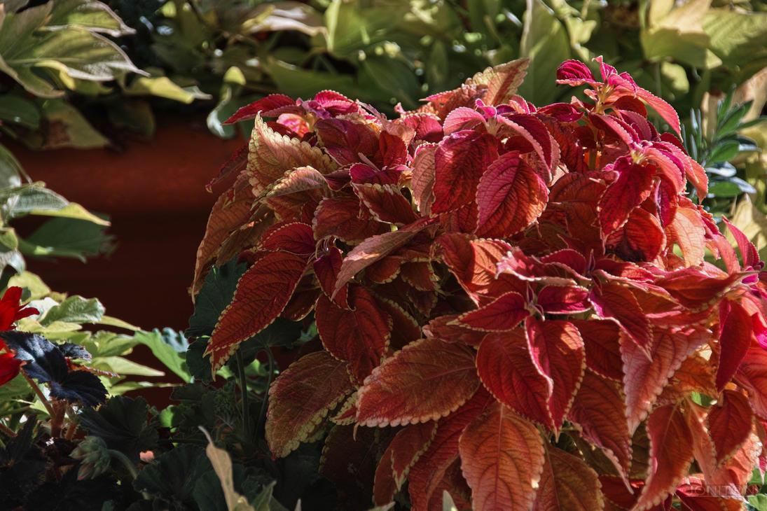 Autumn Red Sdim3687 by Jonitron