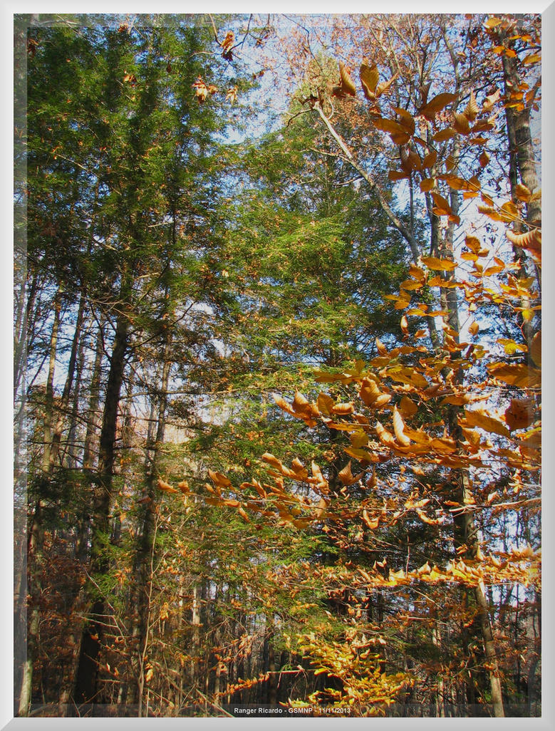 Fighting Creek Trail 25 by slowdog294