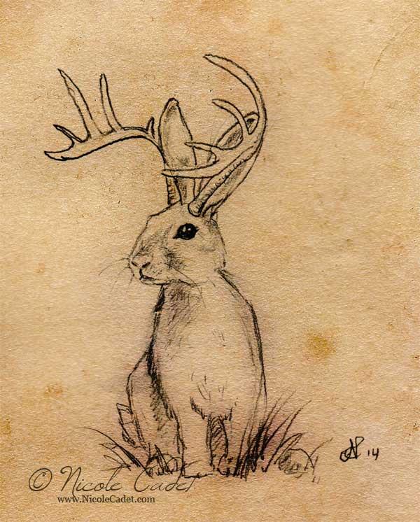 Jackalope illustration
