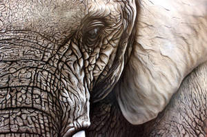 African Elephant by DISCOFRISCO