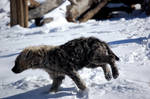Running hyena cub