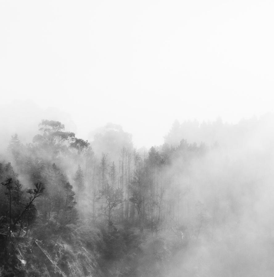 trees in the fog by worthdyingfor
