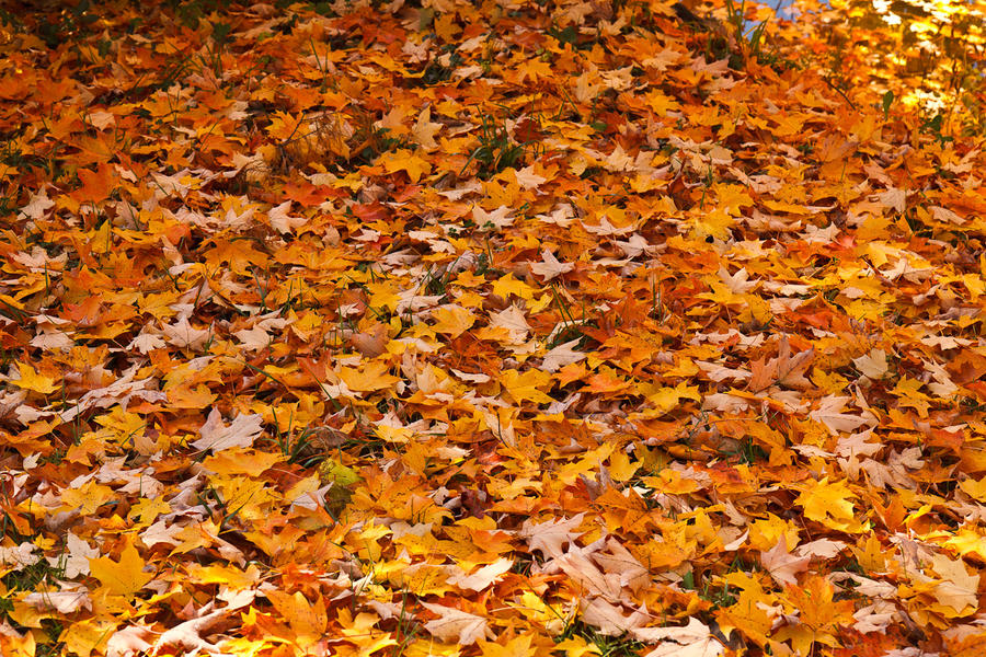 Orange Blanket by worthdyingfor