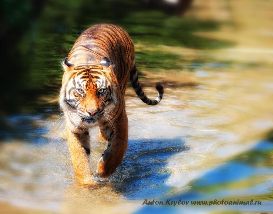 walking on water by Jagu77