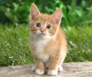 KittyKatGurl321's Profile Picture