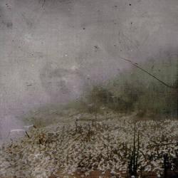 pajaros. by Saradesbois