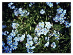 058 - forget-me-not by takemybones