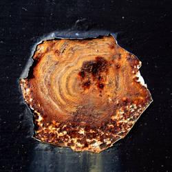 Rusty Shell by mercurycode