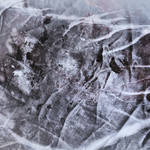 Digital Art Texture 239