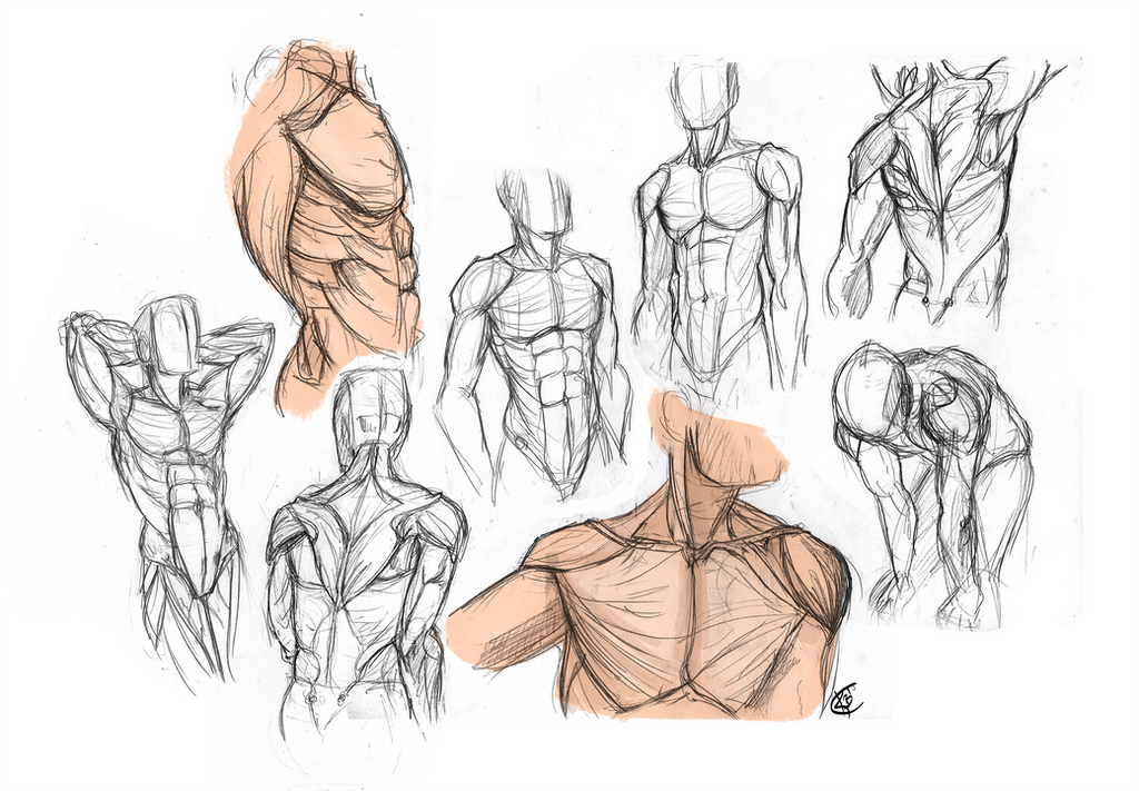 Anatomy - Male Torso by KiilKannibble