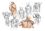 Anatomy - Male Torso