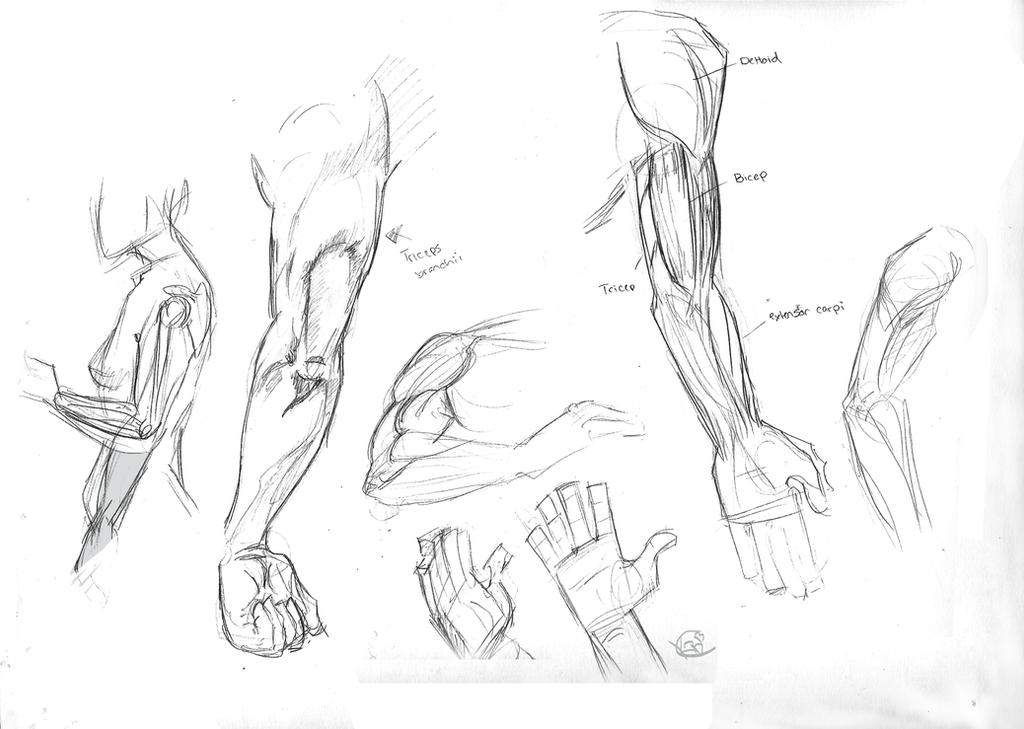 Anatomy - Arm by KiilKannibble