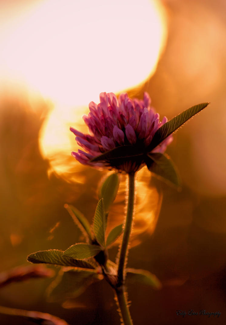 Kiss Me Sunshine By MyLifeThroughTheLens On DeviantArt