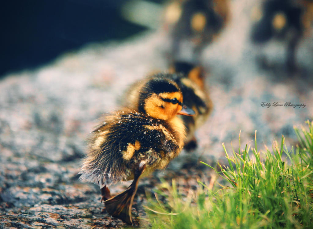 Band of Brothers by MyLifeThroughTheLens