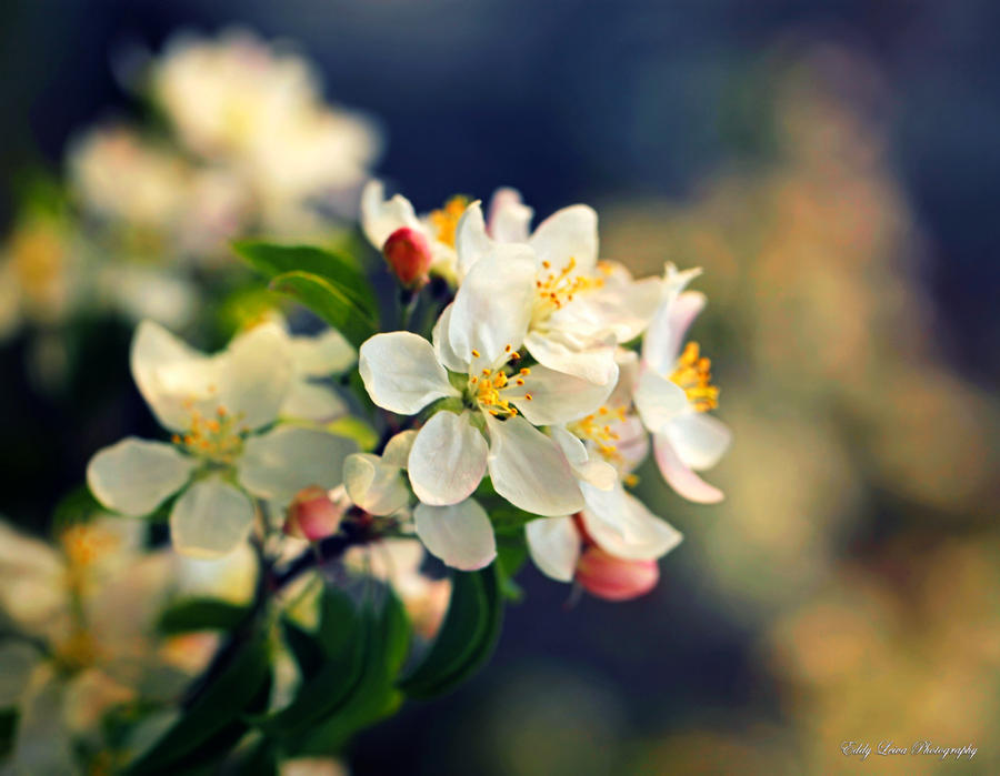 Just a Memory of Spring III by MyLifeThroughTheLens