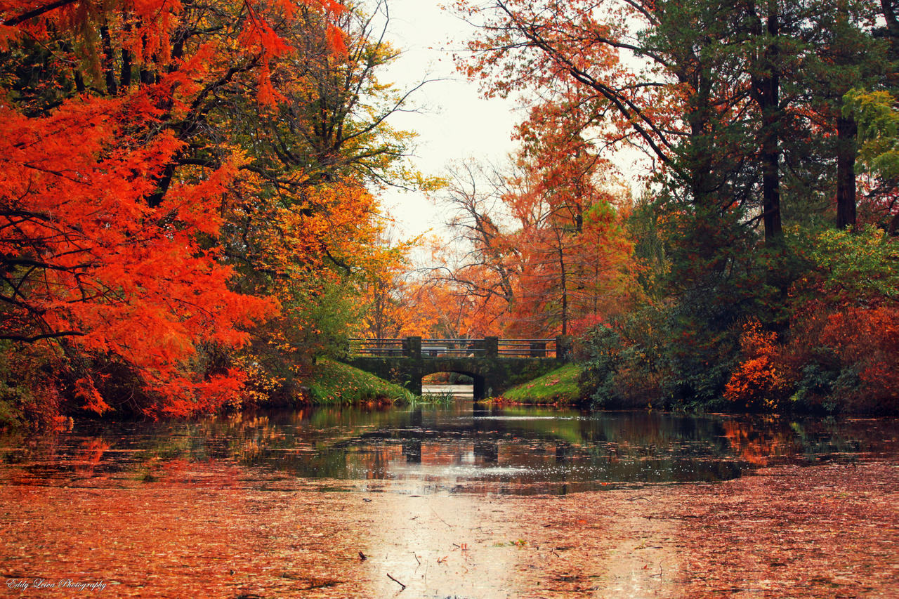 Mount Auburn II by MyLifeThroughTheLens