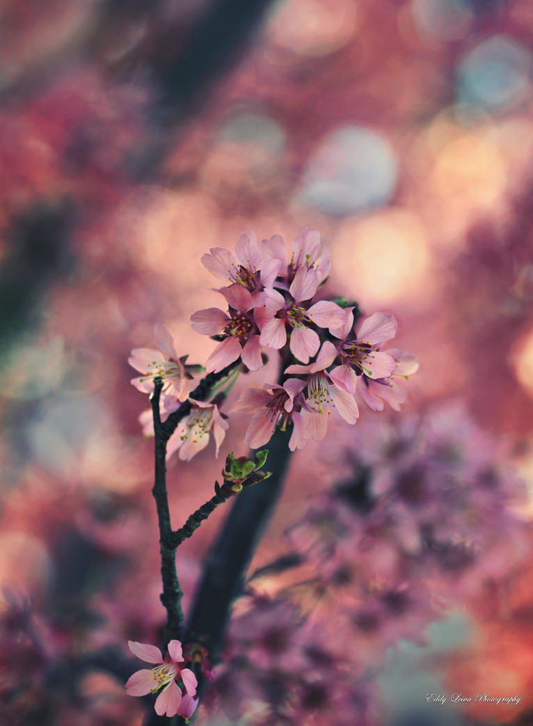 Longing for Spring by MyLifeThroughTheLens