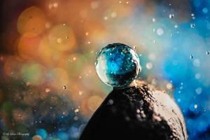 Stellar by MyLifeThroughTheLens