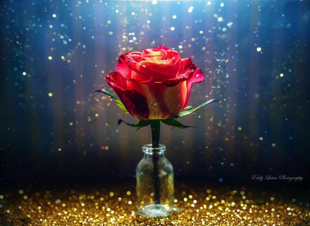 Эдди Лейва. Цветы и капли.