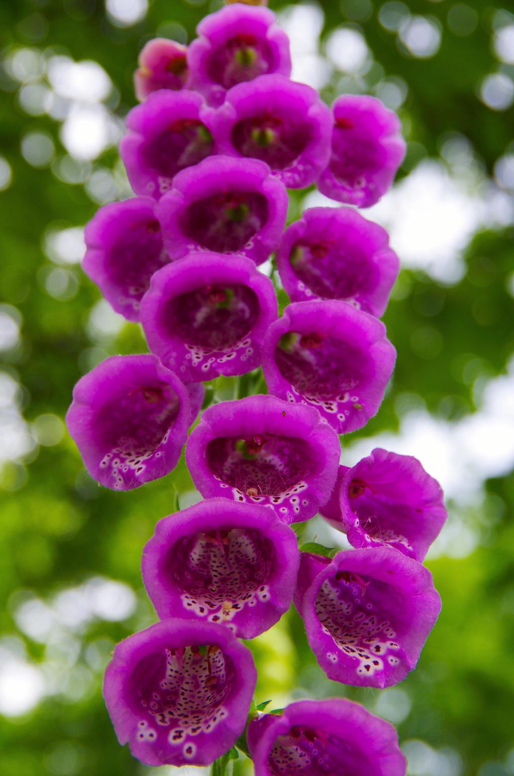 Flower by Grace-love-kindness
