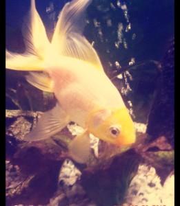 Coco2204's Profile Picture