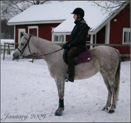 Arabian ID by Snowyowl88