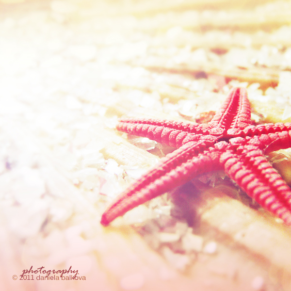 Starfish by DanielaBalkova