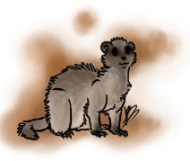 Ferret Practice by Skitcy
