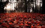 Crimson leafs