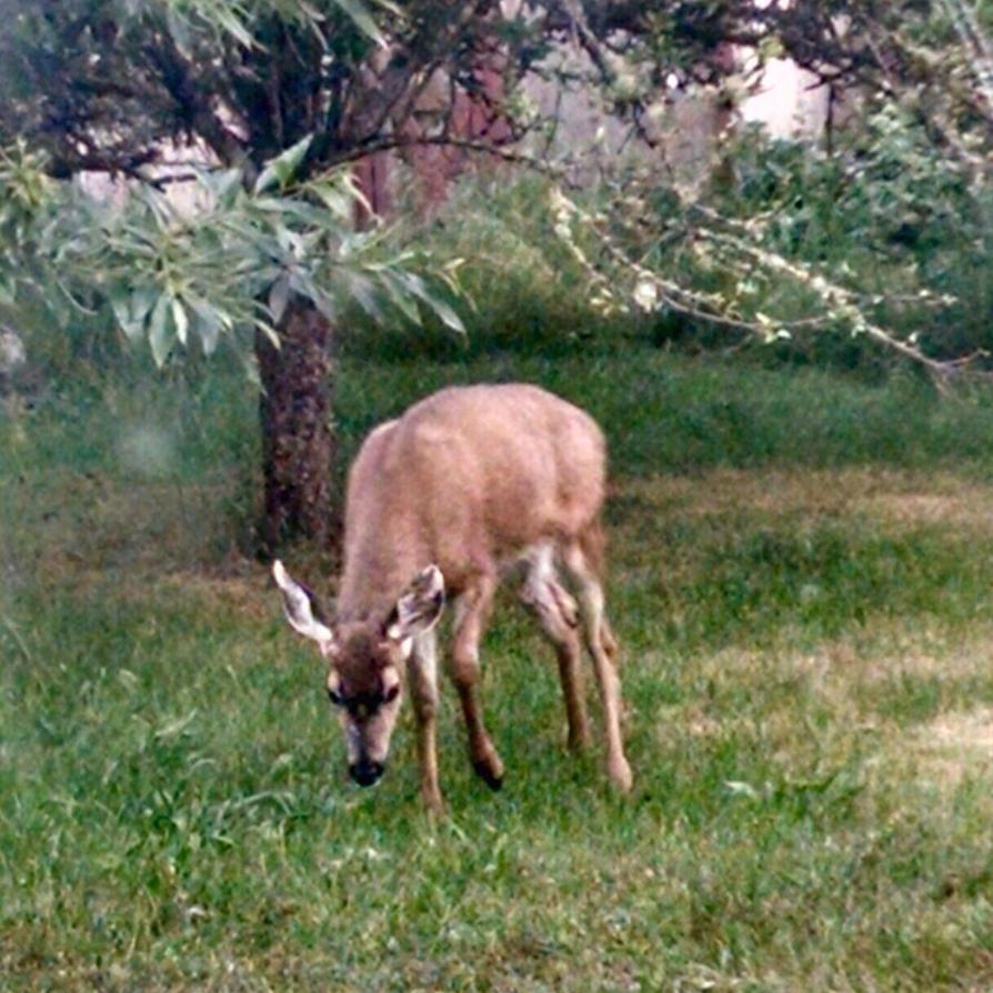 Deerling by arcticqueen
