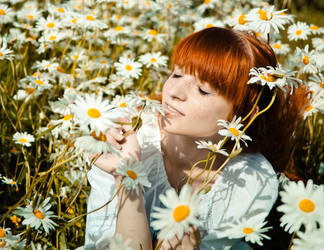 In the field chamomile by YaraKlaproos