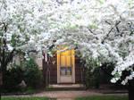 Enchanted doorway by swmmp