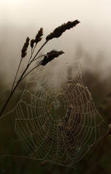 Web by scotto