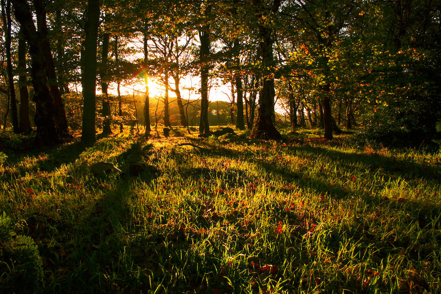 Sunset Woods by scotto