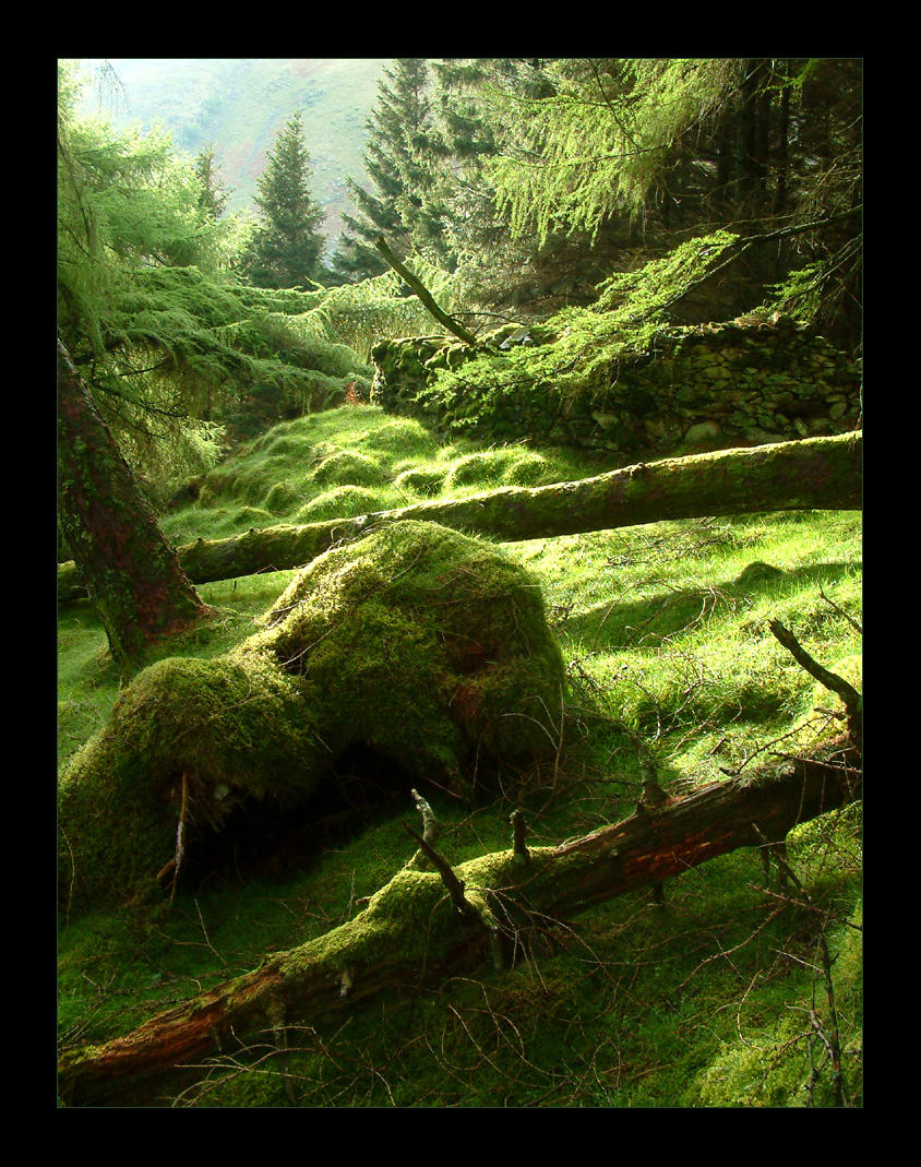 Lake District Woodland Greens by scotto