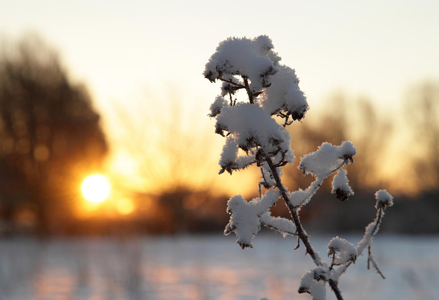 Sun and Snow by scotto