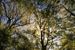 Ulswater Trees
