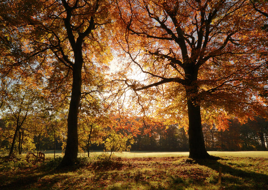 Autumn by scotto