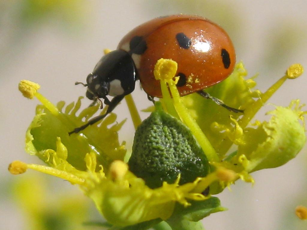 Ladybird by A-n-t-i-g-o-n-e